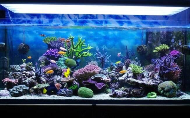 Um aquário precisa de total dedicação do dono