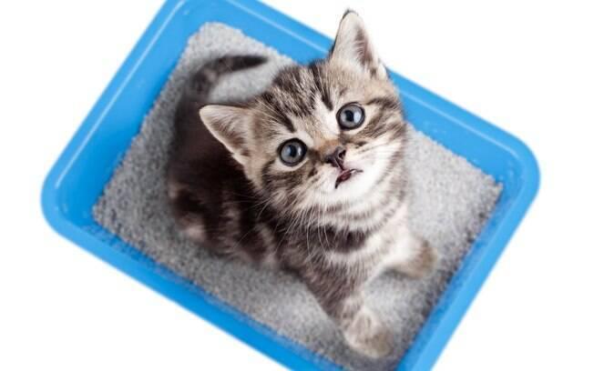 A limpeza da caixa de areia para gatos é uma tarefa muito importante