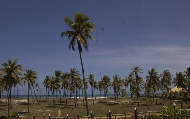 Os coqueiros são presença constante ao longo da Estrada do Coco