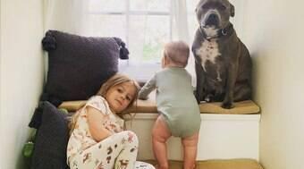 Conheça o pitbull Simon, o melhor irmão mais velho do mundo