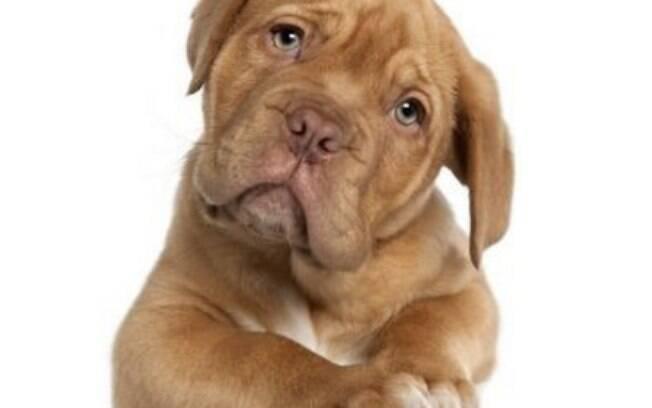 Sintomas e tratamento das doenças renais em cachorros e gatos