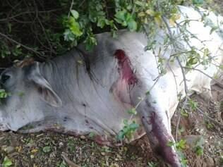 Animais resistiram a mais de 70 balas, antes de de morrer
