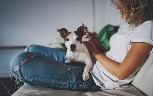 Como os aplicativos para cães ainda não são tão populares, a maioria está em inglês e disponível apenas para o sistema iOS