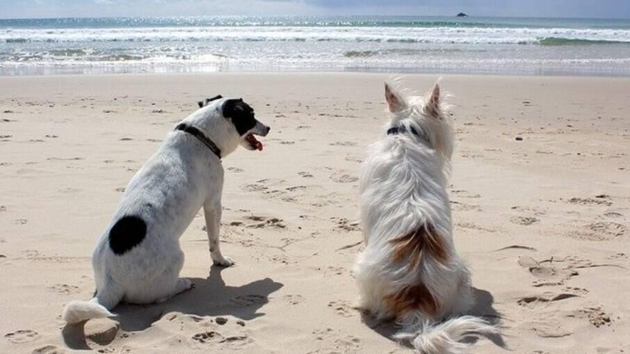 Ao levar o pet para passear no verão, é importante protege-lo dos males causados pelos raios de sol