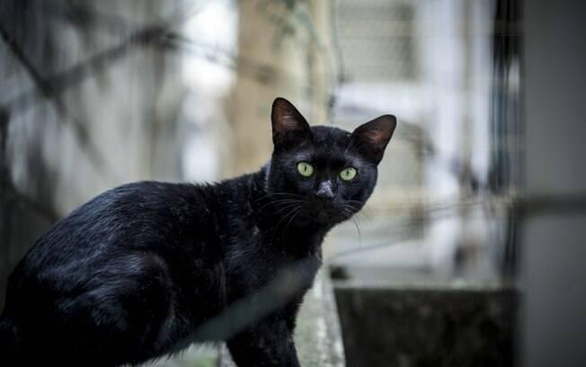 Seria o gato realmente um animal independente?