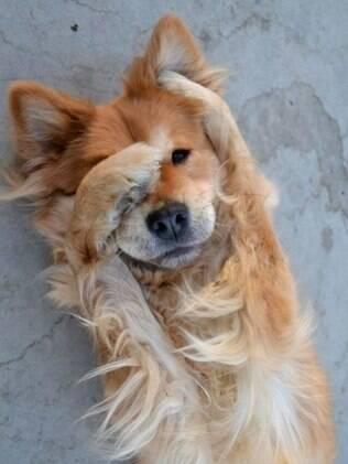 Para resolver o problema de um cachorro chorando é preciso saber a causa