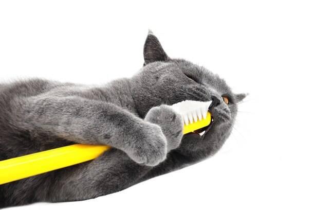 Para que a escovação dos dentes dos animais seja um processo tranquilo, eles precisam se acostumar com a escova
