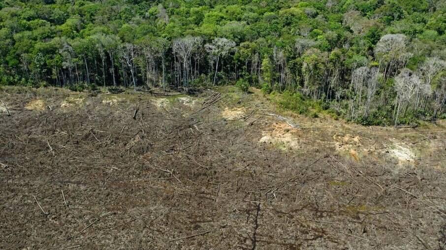 Monitoramento em tempo real e apreensão de equipamentos têm sido eficientes na luta contra o desmatamento