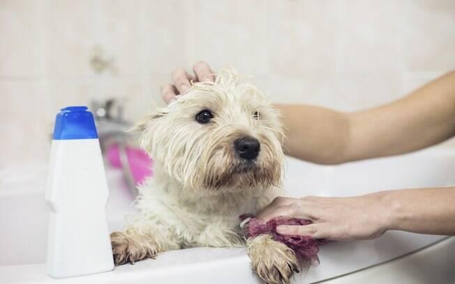 Saiba como dar banho em cachorro de forma fácil e sem precisar sair de casa