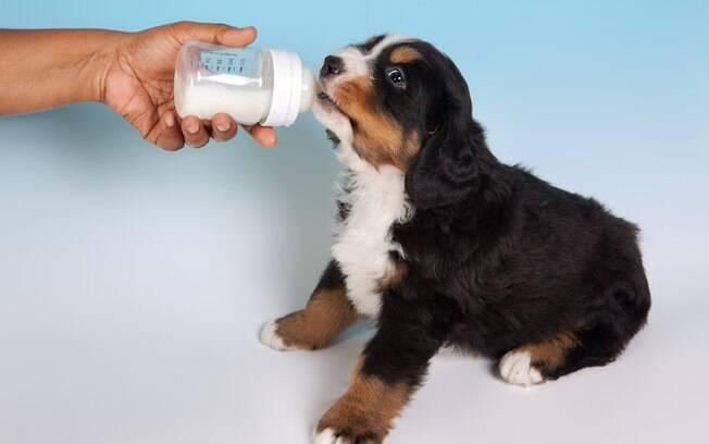 Os cachorros bebem leite?