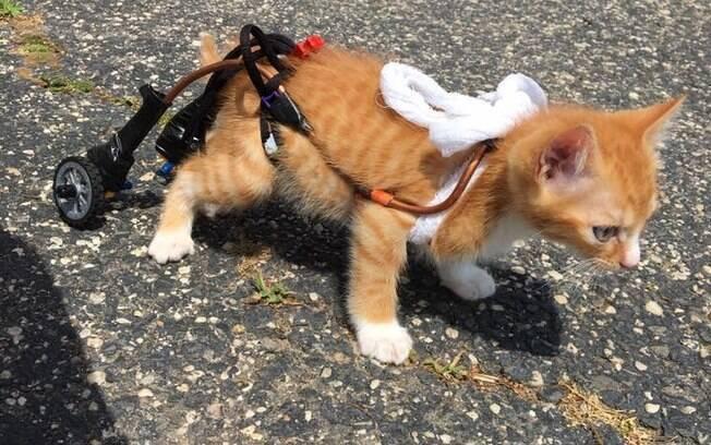 O gatinho ficou famoso ao usar a cadeira de rodas pela primeira vez.
