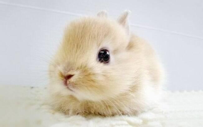 Os filhotes de coelho precisam de total dedicação do dono
