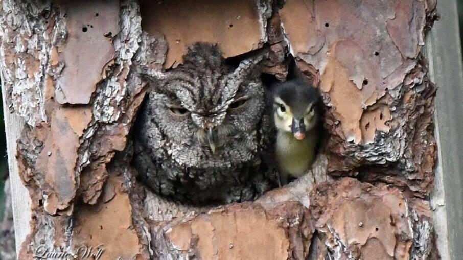 Foto tirada de coruja e pato juntos tirada por Laurie Wolf