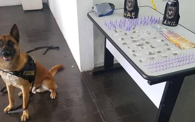 GM detém dois por tráfico de drogas com ajuda de cão Flecha