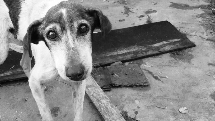 Animais perdidos ou abandonados podem estar assustados, tente uma aproximação tranquila