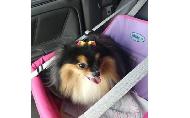 A cadeirinha é outra forma de transportar o cachorro no carro em segurança