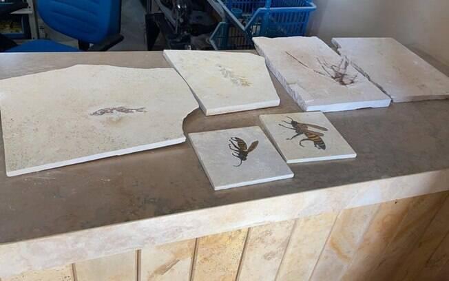 Dois homens foram presos em flagrante com fósseis, em Santana do Cariri e Nova Olinda