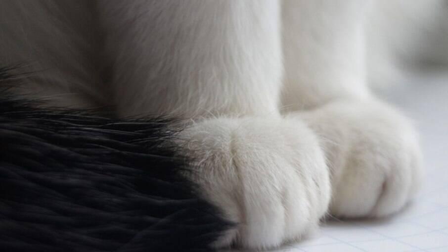 Os gatos liberam feromônios por glândulas que ficam entre os dedos