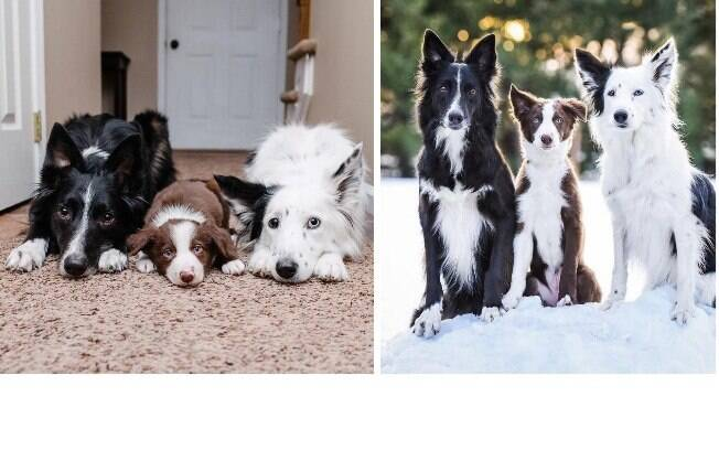 Lembra dos 'cães abraçadores'? Eles ganharam um amigo e o ensinaram a dar abraço