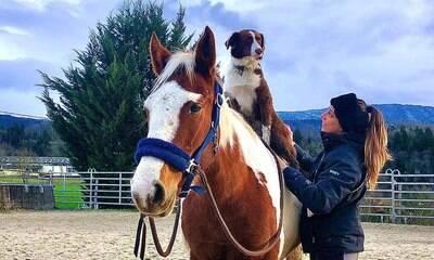 Com cores idênticas, cachorro e cavalo viram grandes amigos