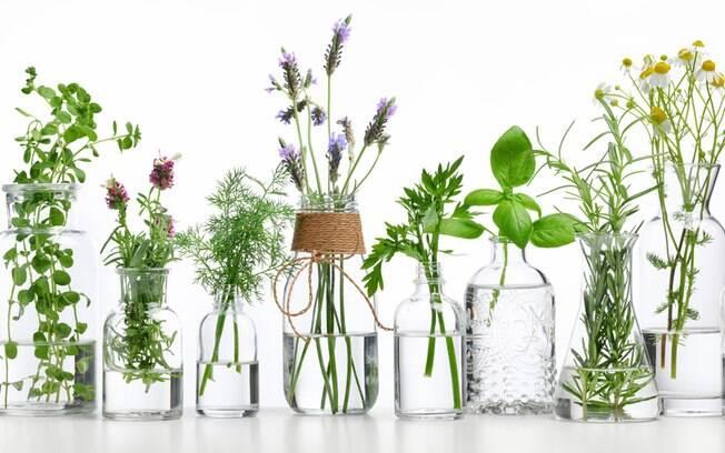 Cultivar ervas em casa ou no apartamento é uma alternativa para diminuir o mal-estar e reduzir dores