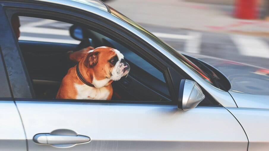Exposição ao vento excessivo pode ser prejudicial à saúde dos olhos dos pets