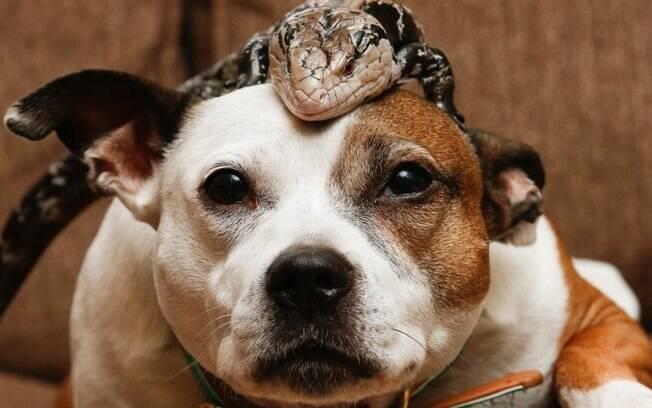 Skye e seu amigo George, o lagarto