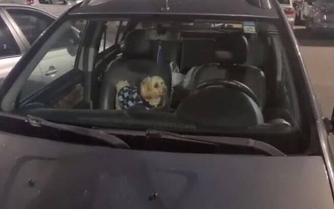 Vídeo: cachorro fica preso em carro em estacionamento de shopping