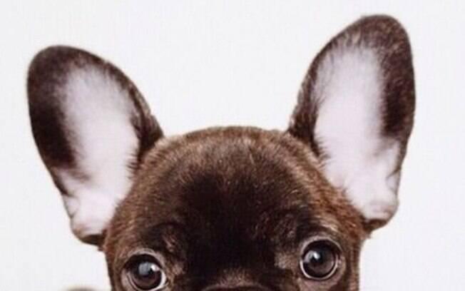 Identidicar um cachorro surdo não é uma tarefa fácil