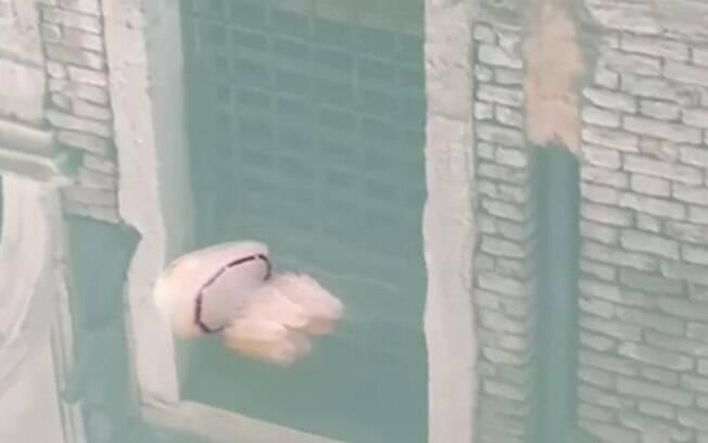 Águas limpas permitem que animais sejam observados