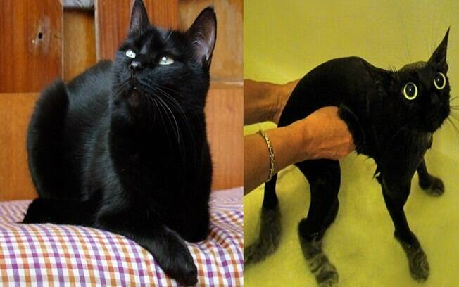 Gato pretinho antes e depois de tomar banho.