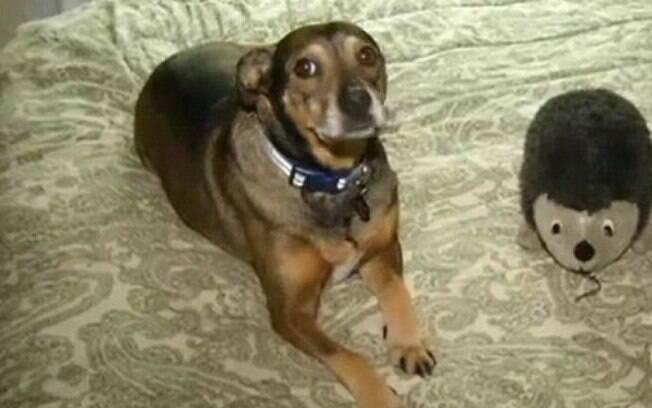 Esse cachorro salvou a vida de uma bebezinha de apenas 9 meses