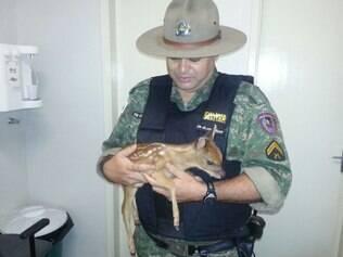 Filhote foi resgatado na Zona Rural de Uberlândia por militares da Polícia Ambiental.