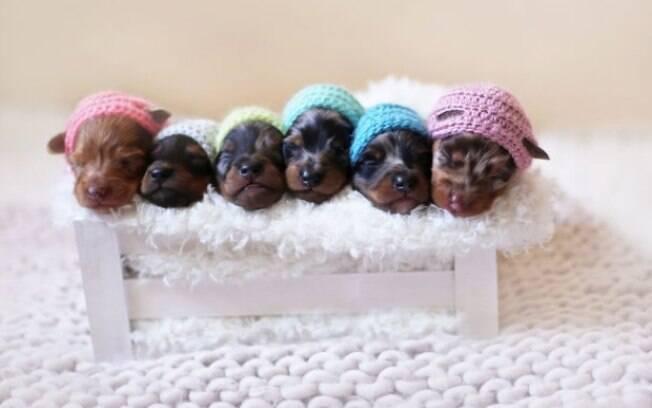Olha que lindinhos eles usando chapéuzinhos bordados.