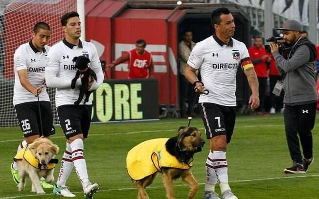 Time de futebol do Chile ajuda campanha, entra com cães para adoção e surpreende a todos