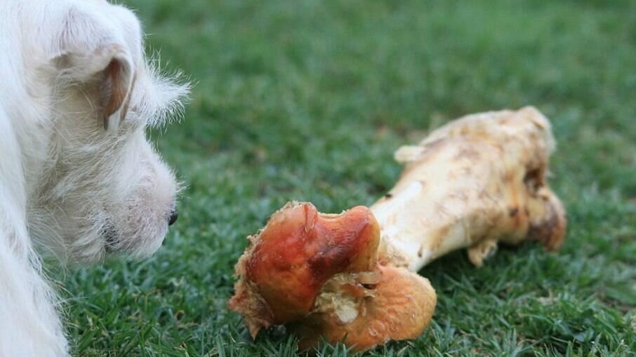 Caso venha a oferecer ossos aos cachorros, estes precisam ser grandes o suficiente para que o pet não consiga colocar inteiro na boca