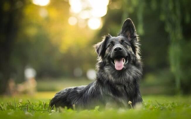 O cachorro de Libra: saiba as características do pet libriano
