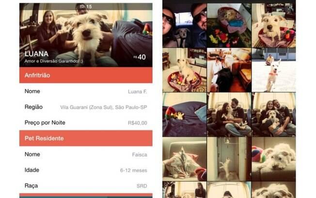 Aplicativo para iOS encontra anfitriões dispostos a cuidar do cachorro na ausência do dono