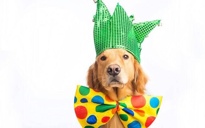 Para levar o cachorro no Carnaval é preciso seguir alguns cuidados; o ambiente de um bloquinho não é muito indicado para os pets