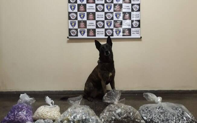 Cão Aruck do Canil da PM encontrou grande quantidade de drogas na Favela da Vila Prudente
