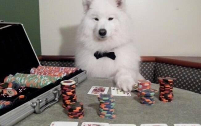 Um cachorro mestre do poker.