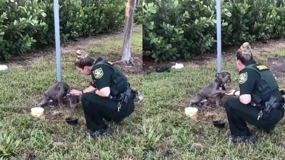 Momento em que a oficial de polícia encontra o cachorro amarrado a um poste