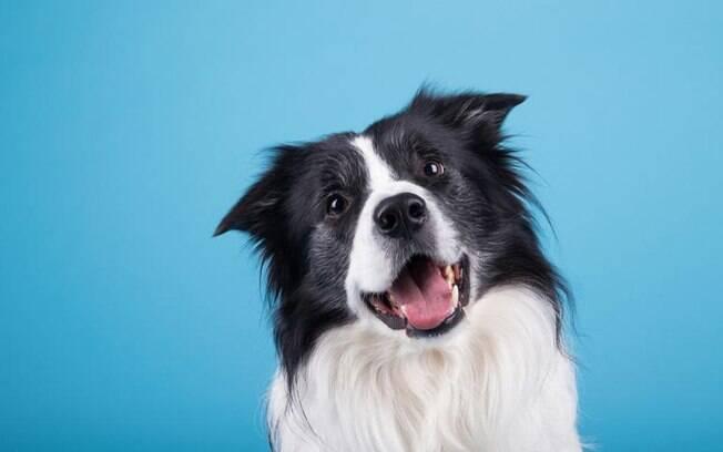 O cachorro com Lua em Escorpião: saiba a compatibilidade com seus tutores