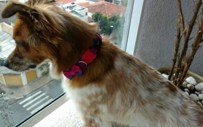 A vira-lata Rose foi recusada por um Pet Shop