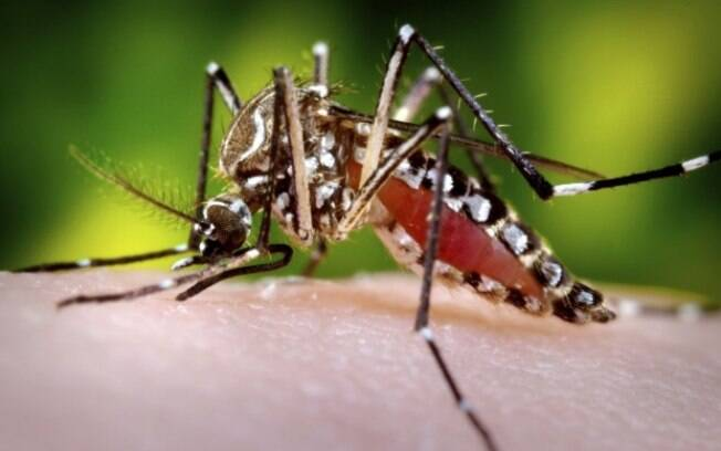 Maior preocupação da Secretaria Estadual de Saúde é com o combate aos mosquitos  Aedes Aegypti e Aedes albopictus, ambos transmissores do vírus e presentes em mais de 80% dos municípios mineiros