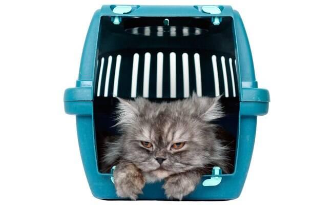 Por não gostarem de mudanças, os gatinhos podem ficar enjoados e mau humorados