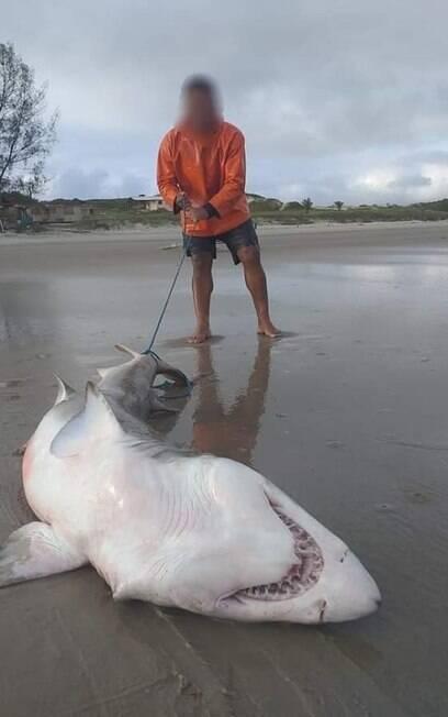Tubarão morto na praia