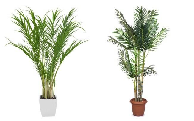 As palmeiras podem ser utilizadas em locais úmidos e integram a lista de espécies para ambientes domésticos