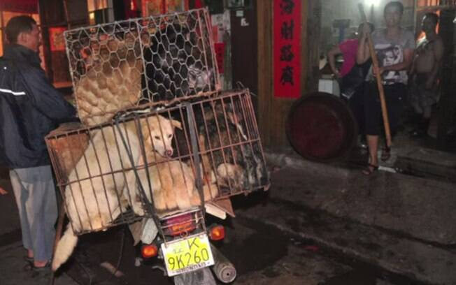 Cães levados em gaiolas na China. Em 2009, surto de raiva levou a morte de milhares de animais, alguns deles a pancadas