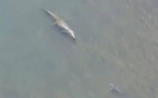 Tubarão e jacaré se encontram em área de banhistas na Austrália